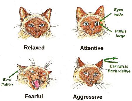 Cat Eye Signals