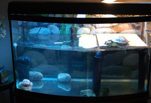 Aquatic Turtles: Tank Size and Water Maintenance ...